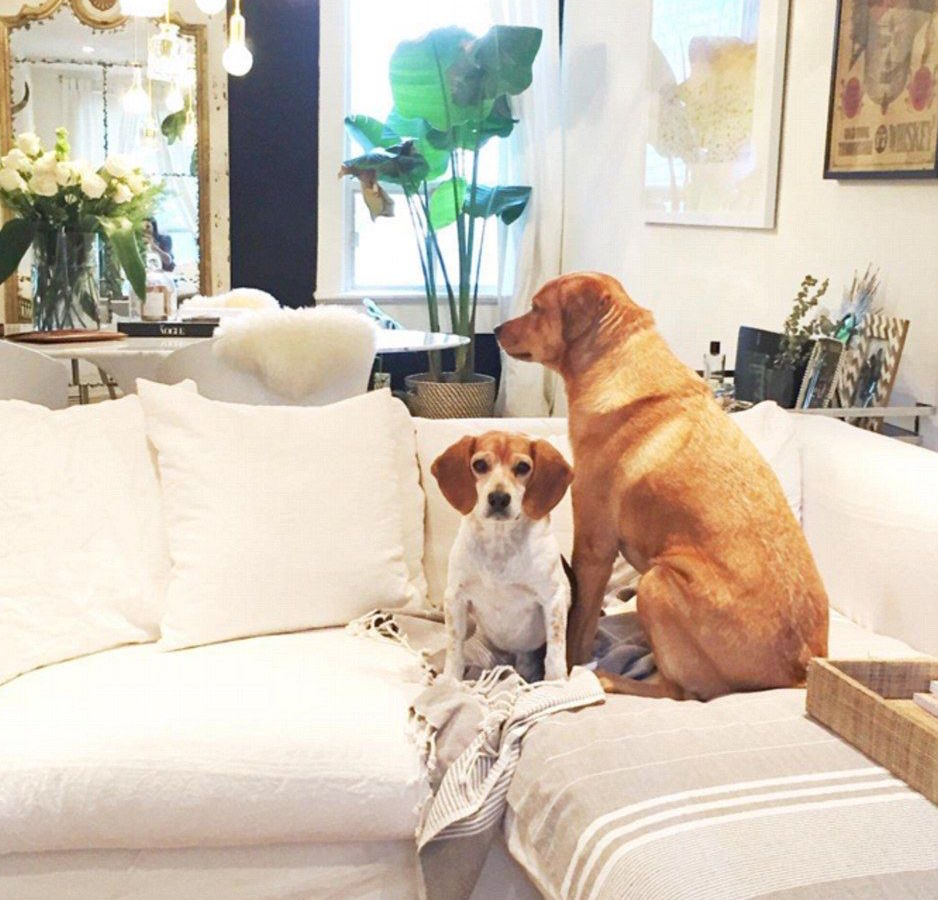 Meghan Markle Interior Design Style Dogs